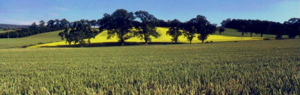 Wheatfield near village of Kippen in Stirlingshire. Has links with Clan Buchanan, Clan MacGregor & the Livingstones.